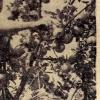 galeria_8698.jpg
