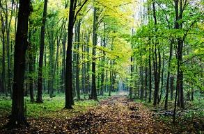 Kihirdette Johannis az erdészeti kihágásokat és bírságokat szabályozó törvényt
