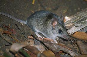 Kritikus helyzetbe került 100 állat- és növényfaj Ausztráliában a bozóttüzek miatt