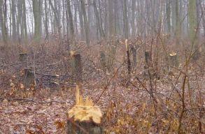 Egy tervezet szigorítaná a fák védelmét: akár öt évig terjedõ börtön is járhat a rongálásért