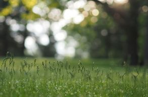 A Romániában található fás legelõk helyzetét vizsgálták a BBTE Földrajz Karának kutatói