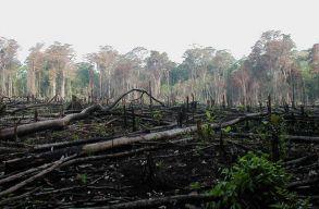 Az amazóniai esõerdõkben rekordokat döntött az erdõirtás a koronavírus-járvány közepette
