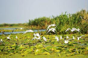 Háromoldalúvá válik a Duna-delta határokon átnyúló rezervátuma