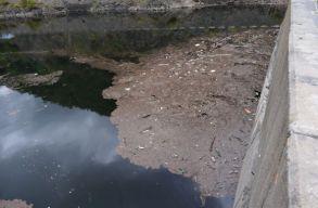 Gyógyszerrel szennyezik a Kolozsvár ivóvízkészletét biztosító Tárnica tavat