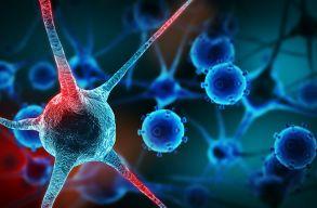 Sikerült a rákos sejteket ártalmatlan zsírsejtekké átalakítani
