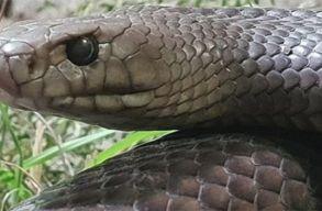 Mindjárt itt a Valentin-nap. Nevezz el egy ausztrál állatkerti kígyót az exedrõl