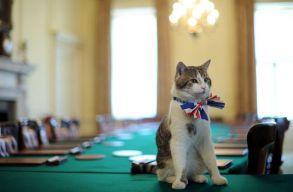A francia EU-ügyi miniszter elárulta, hogy miért hívják Brexitnek a macskáját