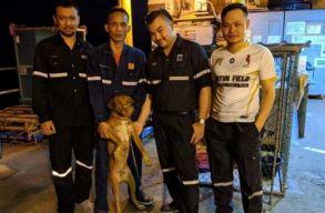 220 kilométerre a parttól találtak egy kutyát az olajfúrók
