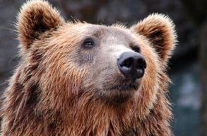 Medveveszélyre figyelmeztették Csíkszereda lakosságát