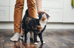 A macskák is kialakítanak kötõdést a gondozóikkal