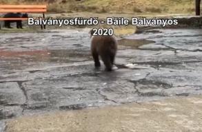 Tamás Sándor a medvék miatt nem tudott borvizet inni Bálványosfürdõn