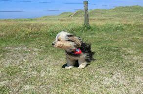 Erõs szél lesz szombaton Erdélyben és Székelyföldön is