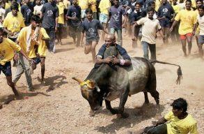 """Ketten meghaltak és 41-en megsérültek egy indiai """"bikaszelídítõ"""" versenyen"""