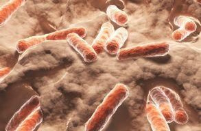 Húsevõ baktériumok fertõznek az Egyesült Államok keleti partvidékén