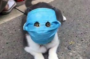 Macska fertõzõdött meg a koronavírussal Hongkongban