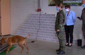 A németek már kutyákkal szagoltatják ki a koronavírust