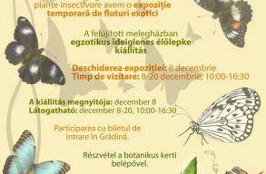 Egzotikus élõlepke kiállítás lesz megtekinthetõ a kolozsvári Botanikus Kertben