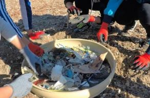 Huszonkilenc kilogramm mûanyag szemetet találtak egy elpusztult ámbráscet gyomrában