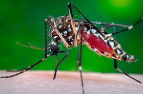 Már 45 személyt fertõzött meg itthon a nyugat-nílusi vírus