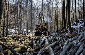 Megoldást ígérnek az erdészetek és közbirtokosságok egyes problémáira