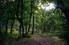 Nagy iramban vágják ki a Hója-erdõ fáit?