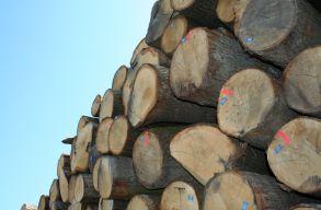 Dragnea benyújtott egy törvényjavaslatot, amely megtiltaná a rönkfa exportját