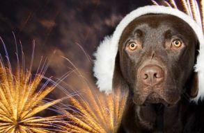 Ön hallott már az olasz városról, ahol bevezették a kutyabarát tûzijátékot?
