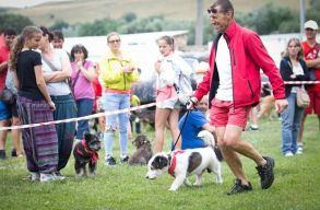 Ismét megrendezik az alternatív kutyatárat Magyarfenesen