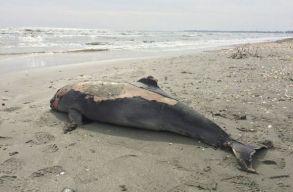 Több mint 1 millió eurót szán a kormány a Fekete-tenger partjára vetõdõ sérült delfinek megmentésére