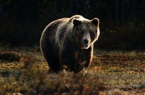 Az RMDSZ nekilátott kidolgozni azt a jogszabályt, amely lehetõvé teszi az azonnali közbelépést a medvék esetében