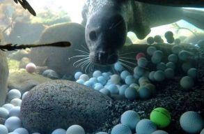 """Két és fél tonna golflabdát """"halásztak ki"""" a kaliforniai Monterey-öböl vizeibõl"""