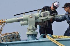 Környezetvédõk és hírességek nyílt levélben szólították fel Japánt a bálnavadászat leállítására