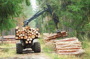 Több mint 12 ezer hektáros területet tervez újraerdõsíteni idén a Romsilva
