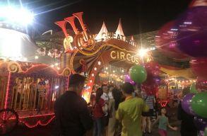 Betiltanák a vadállatos produkciókat a brit cirkuszokban