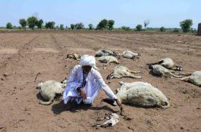 Indiában rettenetes a hõség, több száz település lakhatatlanná vált