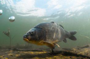 Hatalmas mértékben csökkent a nagytestû édesvízi fajok populációja 1970 óta