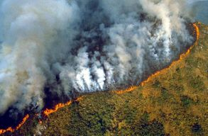 Hetvenkétezernél is több erdõtûz volt idén az Amazonas vidékén