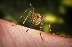 Nem fenyegetik a kolozsváriakat csípõsszúnyogok okozta vírusfertõzések