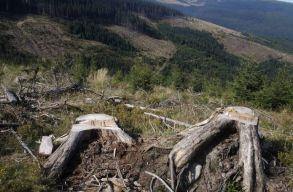 Környezetvédelmi szervezetek jelentették fel Romániát az Európai Bizottságnál