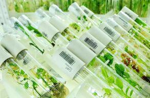 Növényi génbankot hoznak létre Buzãu megyében