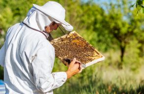 A kormány 37 millió lejjel segíti a méhészeket