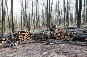 Ellenõrzéseket tartanak hétfõtõl Maros megyében az illegális fakivágások megelõzésére