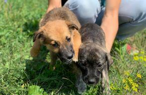 Százhatvan kutya vár gazdára Sepsiszentgyörgyön