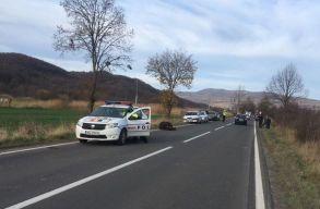 Szakértõ: megmenteni nem tudták volna a Parajd mellett elütött medvét, de lett volna törvényes lehetõség a gyors lelövésére