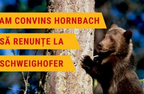 Hivatalos: a Hornbach januártól más beszállítót keres a Schweighofer helyett