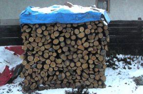 Tûzifakrízis: nehéz volt fához jutni idén