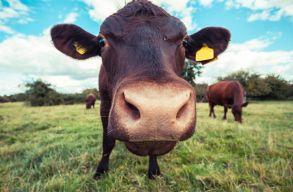 Mennyi víz kell 1 kiló marhahúshoz?