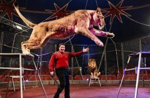Betiltották a vadállatok cirkuszi szerepeltetését Romániában