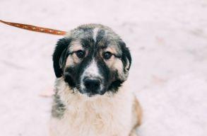 Lola Belgiumba költözött, avagy újabb örökbefogadás a Rexit kutyái közül
