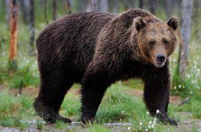 """A """"medvebûnözés"""" Bukarestbe viszi szerdán a székelyföldi elöljárókat"""